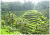 Best Bali Guide, your proffessional travel and guide